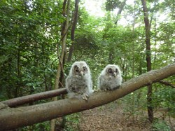 owl170523.jpg