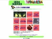 hatunaki2.jpg